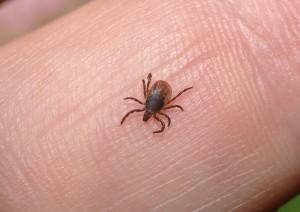grass-lice-2398924_1920